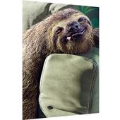 Circle K – Sloth